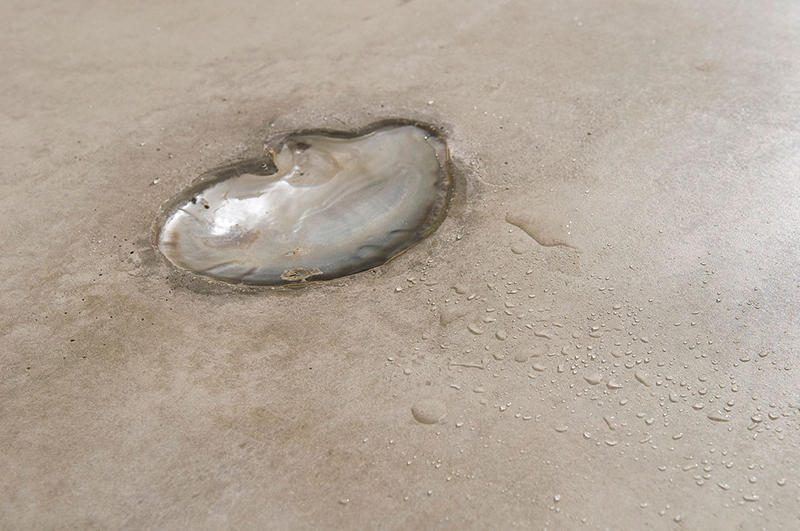 Alessandro Piangiamore | An empty shell dripping on a concrete floor, 2011, detail.