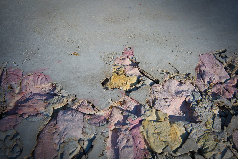 Un petalo viola su un pavimento di cemento, 2015 Concrete, pigments, metal (detail)