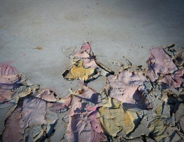featured--Alessandro-Piangiamore-un-petalo-viola-su-un-pavimento-di-cemento